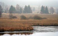 Padrťské pláně v mlze, pohled z hráze Hořejšího p. rybníka