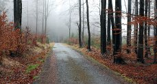 Cesta poblíž rezervace