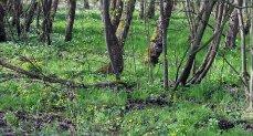 Mokřadní les u Mokrovrat