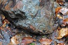 Stromatolit na Kokšíně