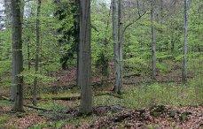 Přírodní rezervace Kokšín