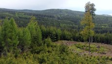 Pohled z úbočí Koruny přes údolí Třítrubeckého potoka