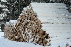 Mezi Okrouhlíkem a Trokaveckou skálou se těží v zimě 2010 ostošest