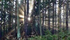 Podzimní ráno na Pateráku