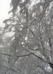 Zima na stromech