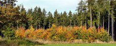 Mladý les nad Bohutínem