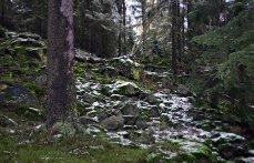 Buližníkový výchoz na úbočí vrchu Kokšín