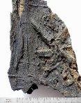 Hvězdicová struktura na dubu z čelákovické pískovny (foto ARUP)