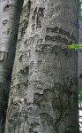 Třemšín