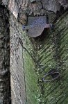 Vrch Čilina - lizina se svodným plíškem a zbytkem drátu pro uchycení nádobky