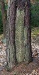 Lizina z doby 2. sv. války, vrch Čilina