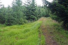 Lesní úsek pod vrchem