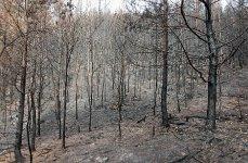 požářiště u Pavlovska