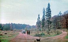 U Zbiroha, pravděpodobně rezervace Kohoutov, 1964